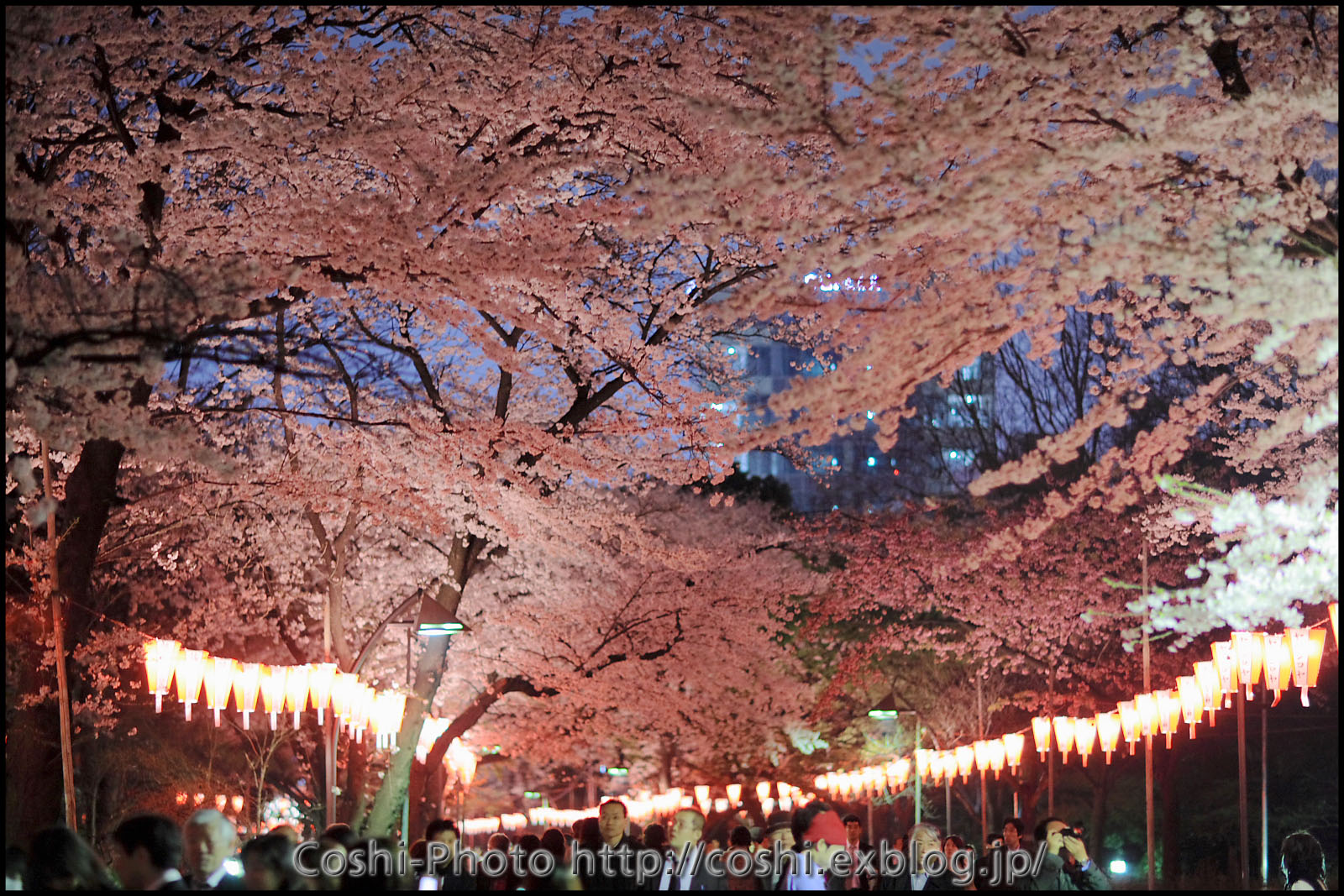 200万人もの花見客が訪れる桜の名所