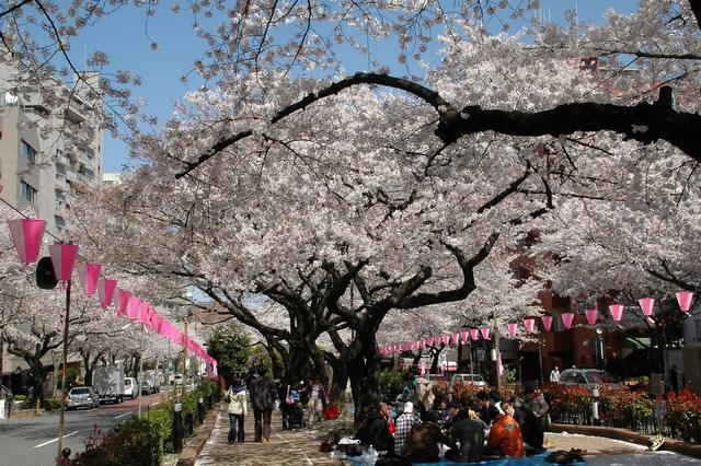 小石川植物園 春の花_f0012718_0122432.jpg