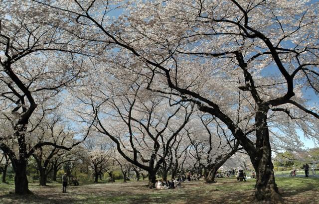 小石川植物園 春の花_f0012718_039321.jpg