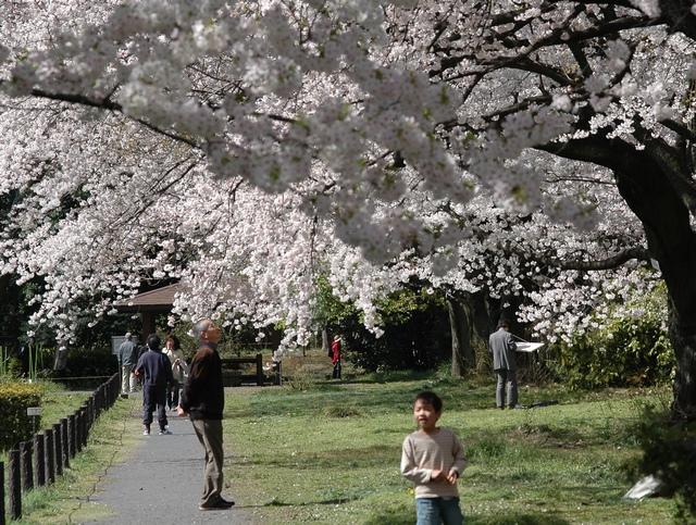 小石川植物園 春の花_f0012718_0431534.jpg