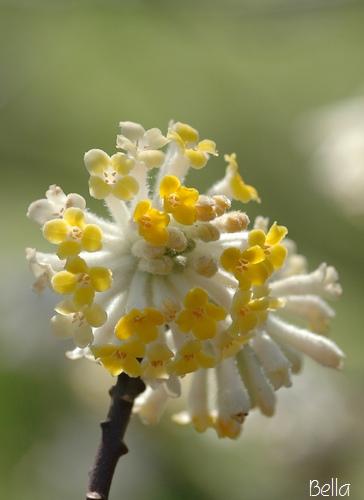 小石川植物園 春の花_f0012718_054652.jpg