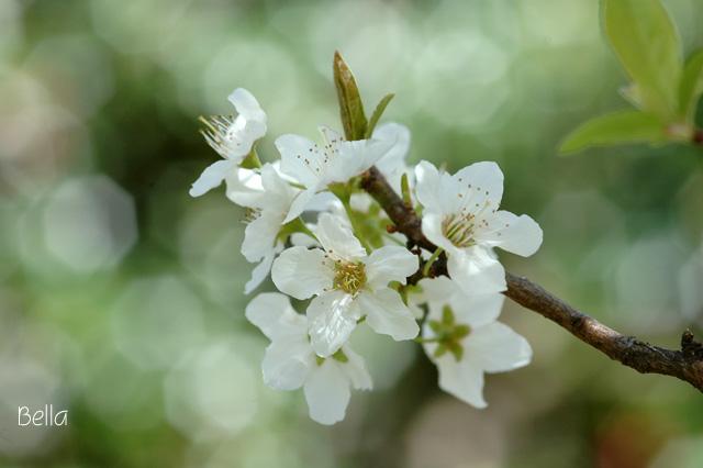 小石川植物園 春の花_f0012718_132448.jpg