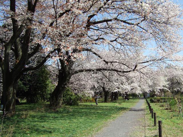 小石川植物園 春の花_f0012718_22251085.jpg