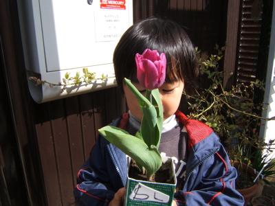 咲いた咲いたチューリップの花が_c0004024_12164789.jpg