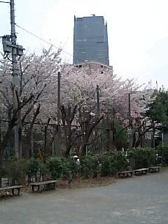 奄美から東京へ。_f0056929_20143896.jpg