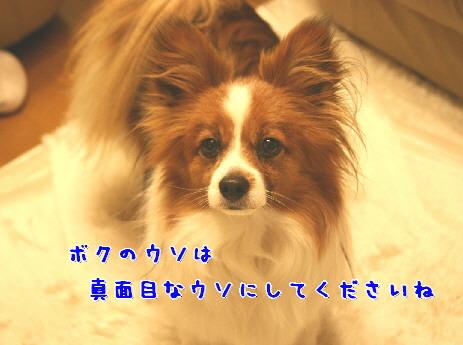 d0013149_240835.jpg