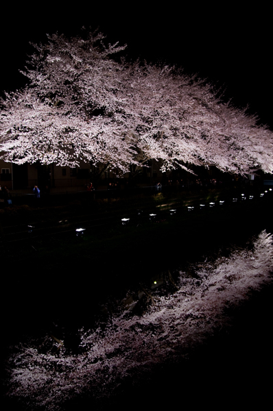 野川の夜桜_a0003650_0374514.jpg
