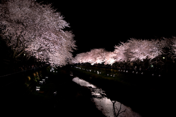 野川の夜桜_a0003650_0384226.jpg