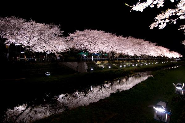 野川の夜桜_a0003650_0423644.jpg