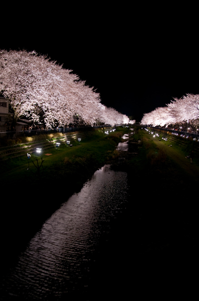 野川の夜桜_a0003650_0432520.jpg