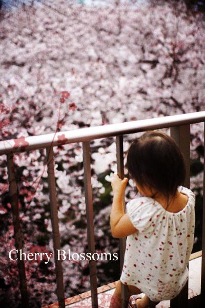 ベランダ花見_f0149855_20444390.jpg