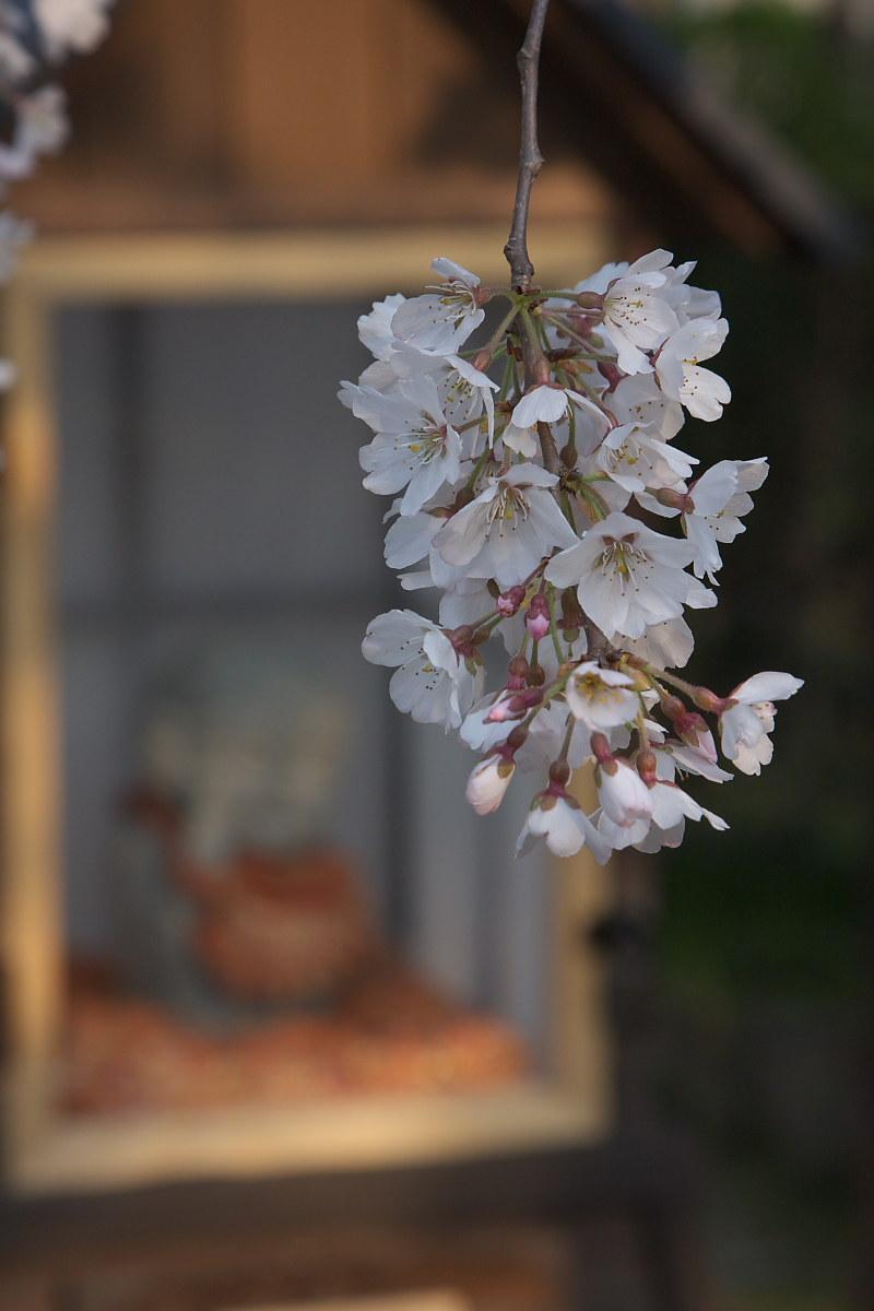 京都 伏見区界隈 _f0021869_9531531.jpg