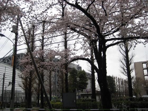 桜満開 _c0052576_22141492.jpg