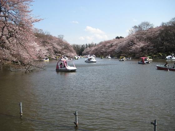 井の頭恩賜公園 (3/26) _c0052576_2281852.jpg