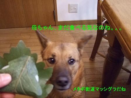 b0087400_022559.jpg