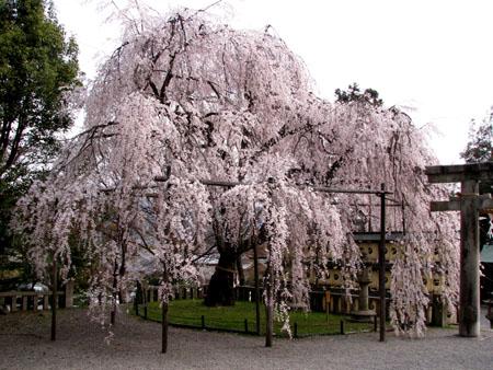 大石神社_e0048413_21451911.jpg