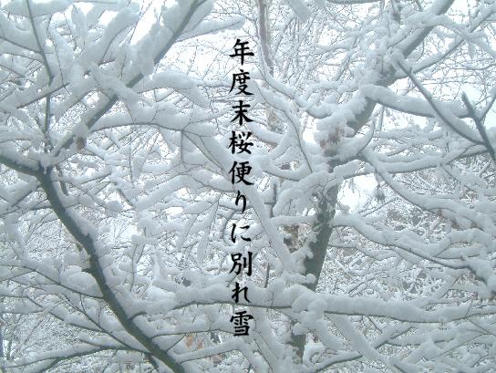 別れ雪_e0099713_2132074.jpg