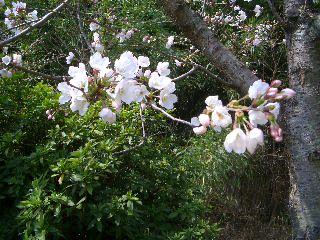 春の日々_e0136815_0351645.jpg