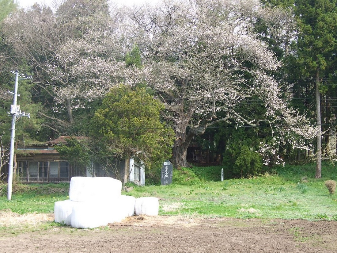 一気開花の春はもうすぐ_d0001843_231314.jpg