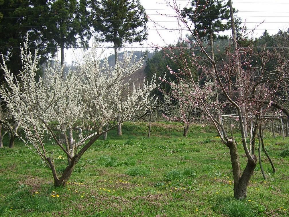 一気開花の春はもうすぐ_d0001843_23172316.jpg