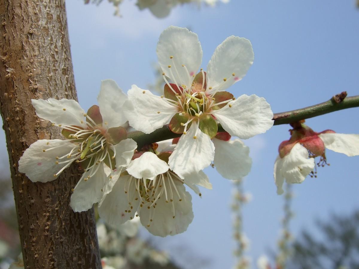 一気開花の春はもうすぐ_d0001843_23181010.jpg
