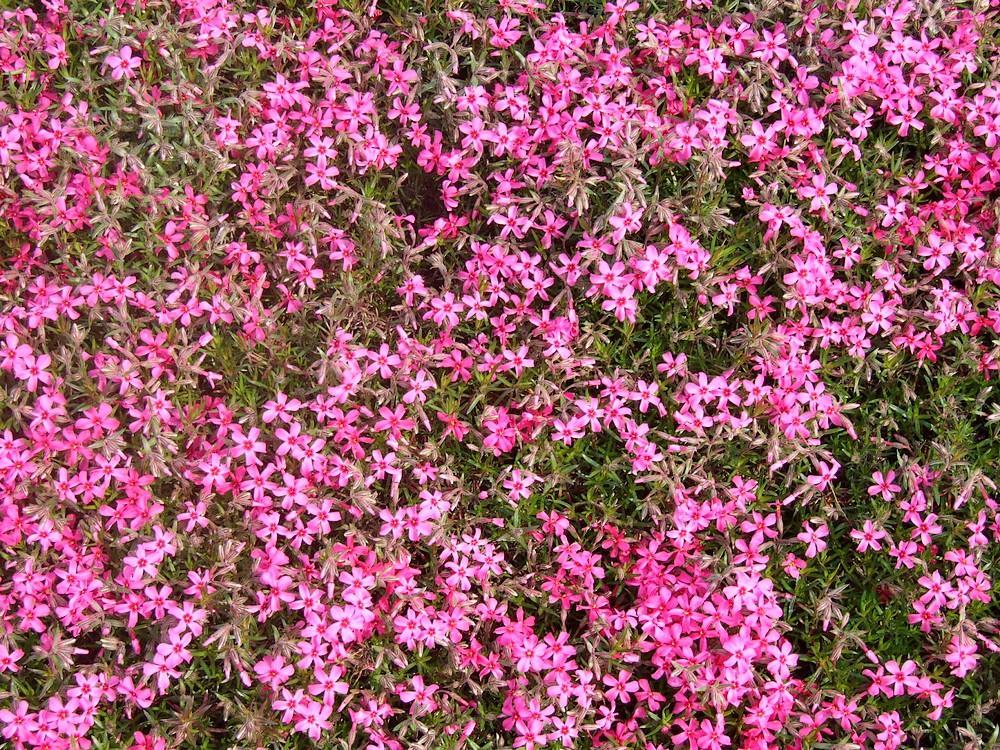 一気開花の春はもうすぐ_d0001843_2319771.jpg
