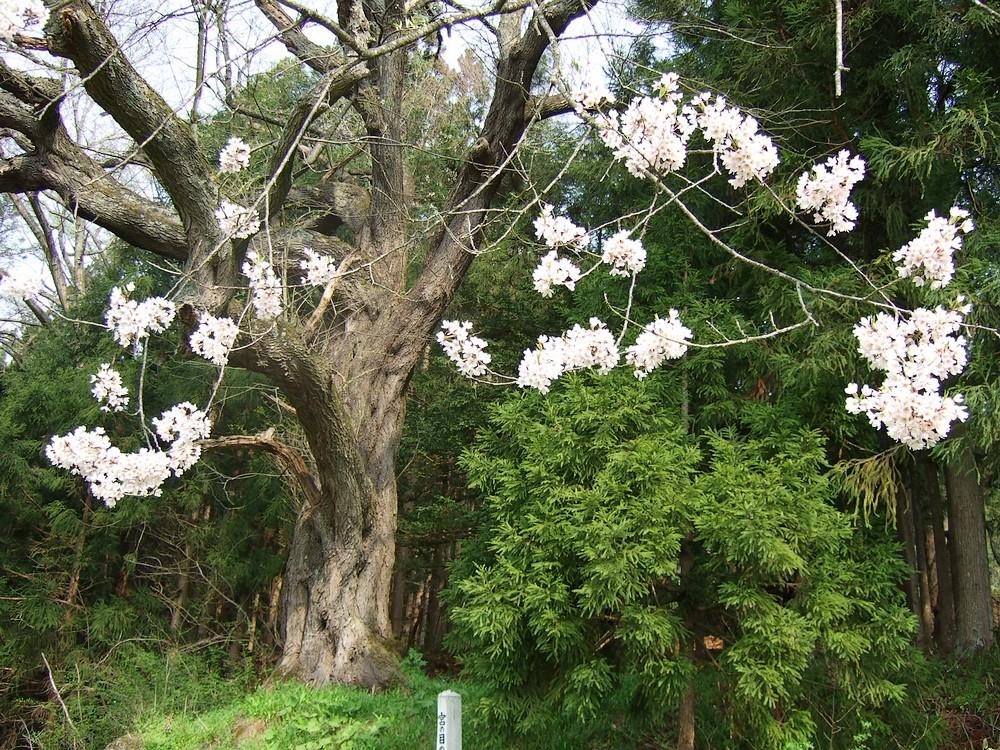 一気開花の春はもうすぐ_d0001843_23252131.jpg