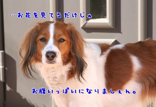 d0013149_012762.jpg