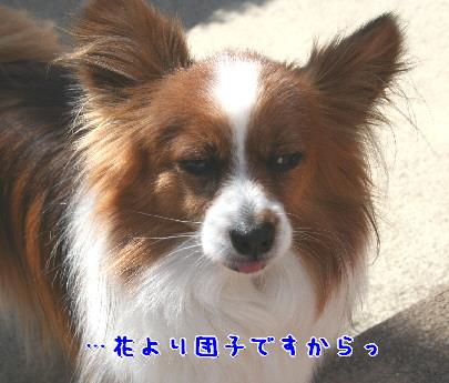 d0013149_0302991.jpg