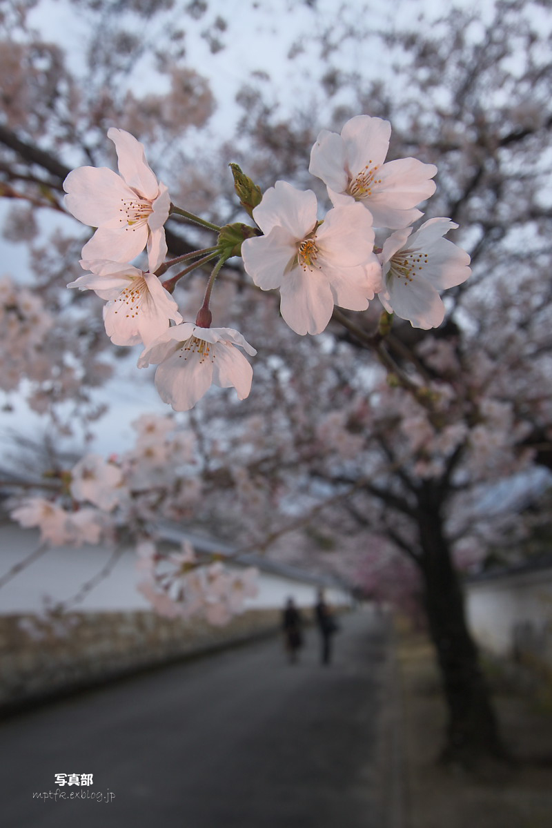 桜撮影  テクニック_f0021869_10304920.jpg