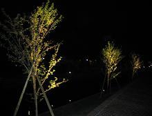 春の夜_f0138874_2332263.jpg