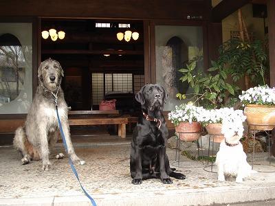 世界最大の大型犬_c0140982_1824524.jpg