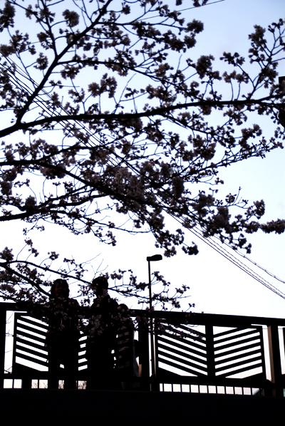 ほとんど夜桜の旅_d0028499_19325946.jpg