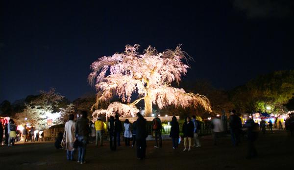 ほとんど夜桜の旅_d0028499_19354477.jpg