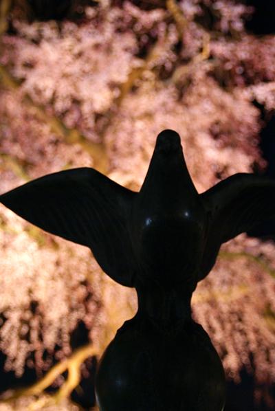 ほとんど夜桜の旅_d0028499_1936561.jpg