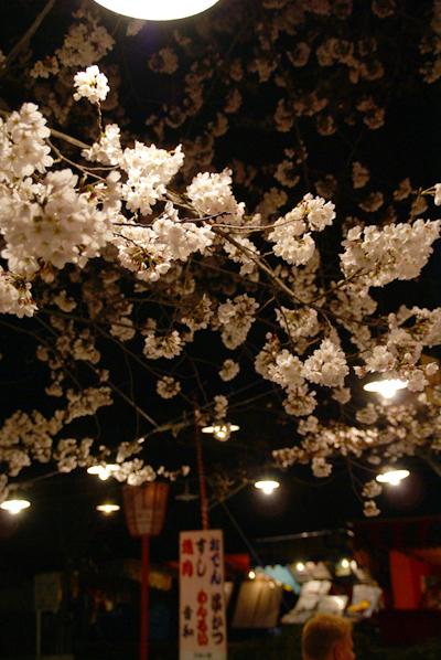 ほとんど夜桜の旅_d0028499_19371729.jpg