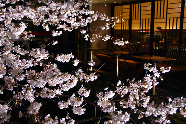 ほとんど夜桜の旅_d0028499_19372983.jpg