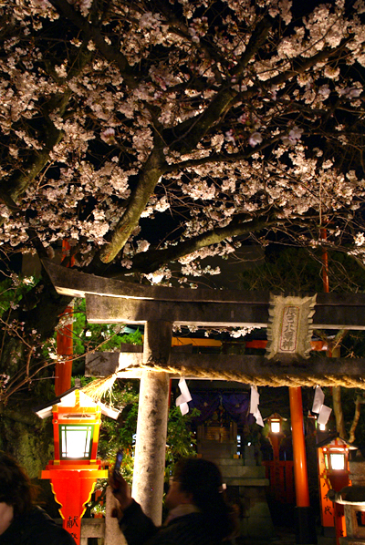 ほとんど夜桜の旅_d0028499_19374364.jpg