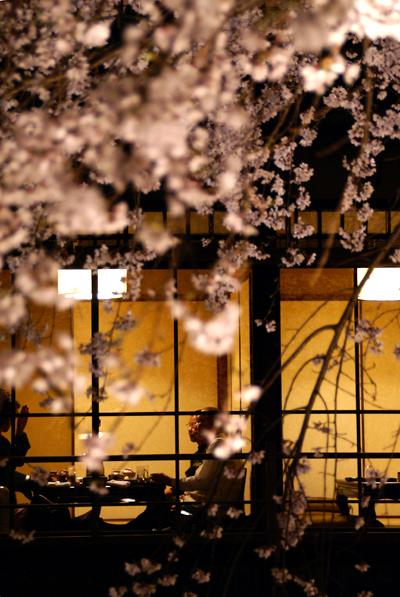 ほとんど夜桜の旅_d0028499_19375411.jpg