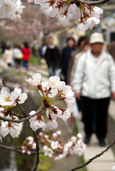 ほとんど夜桜の旅_d0028499_19383837.jpg