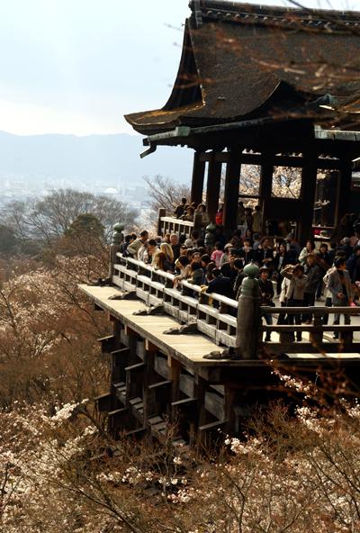 ほとんど夜桜の旅_d0028499_19414474.jpg