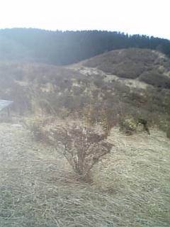 f0135608_84721.jpg