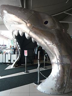 水族館で子どもにまちがえられる の巻_c0053520_1102435.jpg