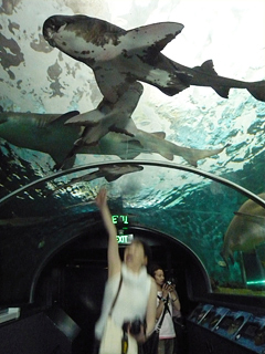 水族館で子どもにまちがえられる の巻_c0053520_1361236.jpg