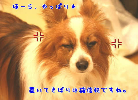 d0013149_1556156.jpg