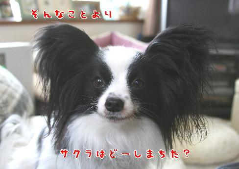 d0013149_192242.jpg