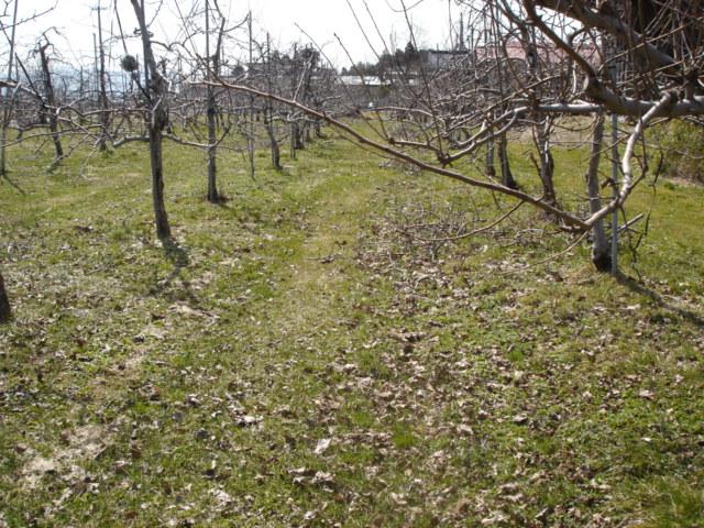春です。_e0019167_1254438.jpg