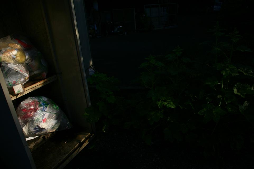 光の示す方へⅦ_c0129671_2126125.jpg