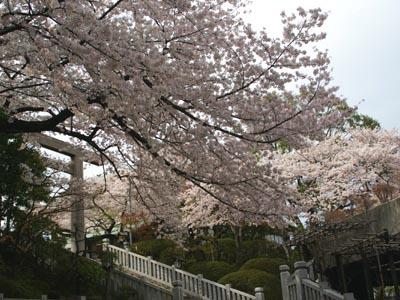 桜の季節_f0062790_0521330.jpg