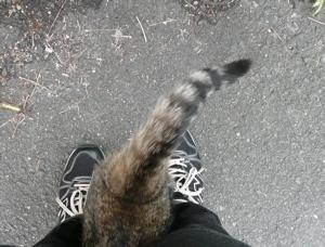 * 猫の気持ち *_f0146198_15115311.jpg
